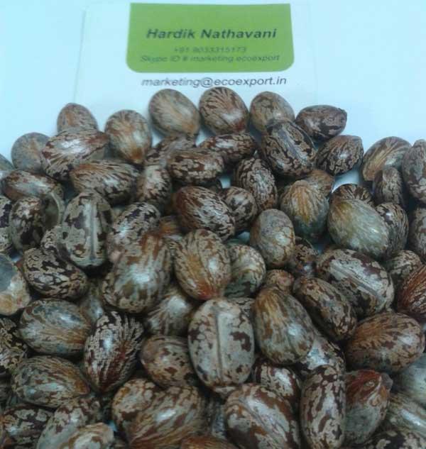 Castor-Seed