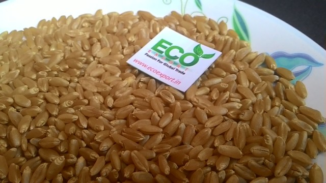 Indian Milling Wheat Exporter